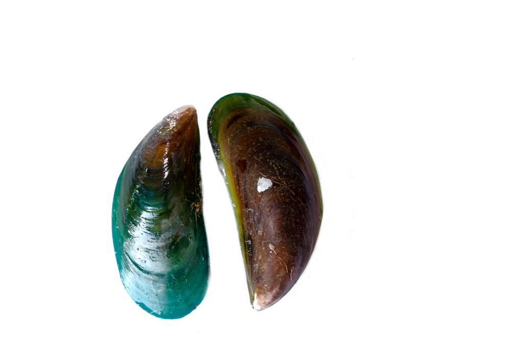 green lipped mussel omega xl